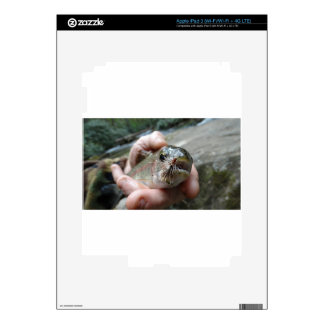 Rainbow Trout photo Decals For iPad 3