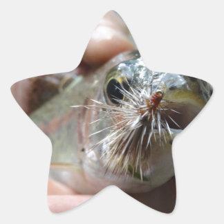 Rainbow Trout photo Star Sticker