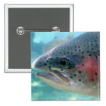 Rainbow Trout Pinback Buttons
