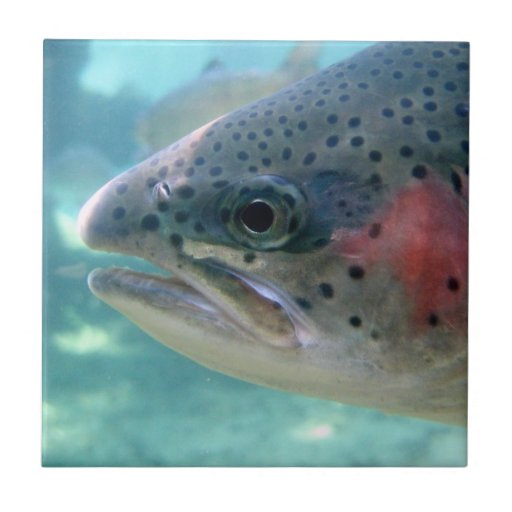 Rainbow Trout Small Square Tile