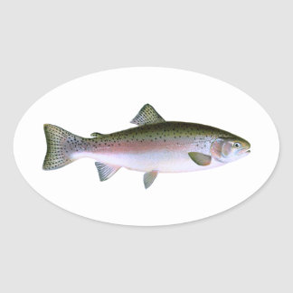 Rainbow Trout Oval Stickers