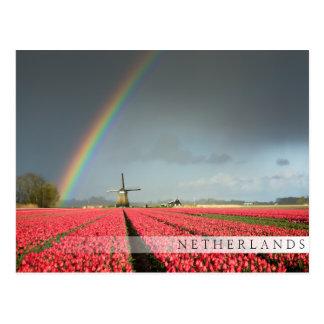 Rainbow, tulips and windmill bar postcard