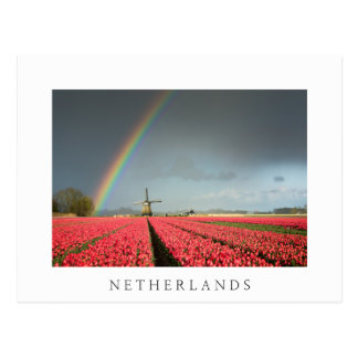 Rainbow, tulips and windmill Netherlands postcard