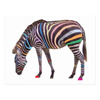 Rainbow Zebra Postcard