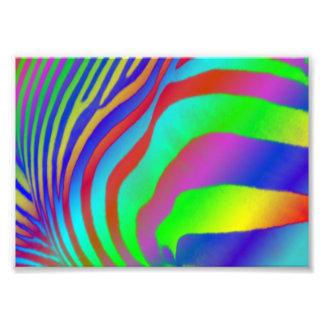 Rainbow Zebra Print Photograph