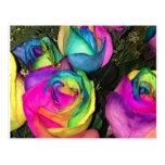 rainbowroses.jpg postal
