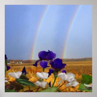 Rainbows and Irises Poster