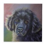 Rainbows and Sunshine - Newfoundland Dog Art Tile