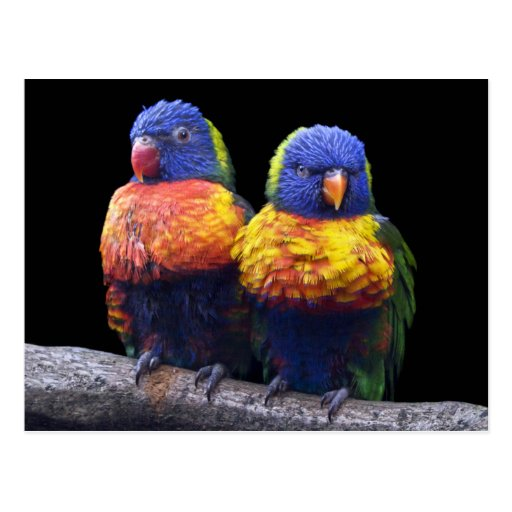 Rainbows Postcard