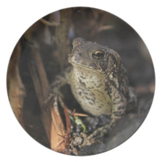 Raindrop and Frog Melamine Plate