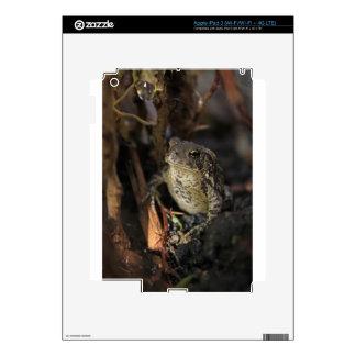 Raindrop and Frog Skin For iPad 3