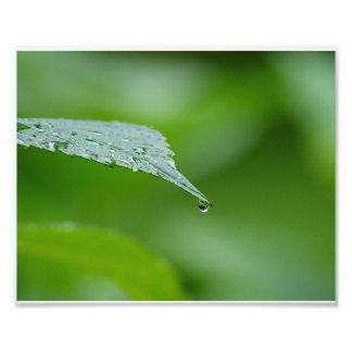 Raindrop Leaf 10x8 Photographic Print