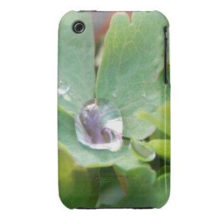 Raindrop on Columbine Leaf iPhone 3 Cover