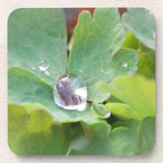 Raindrop on Columbine Leaf Coaster
