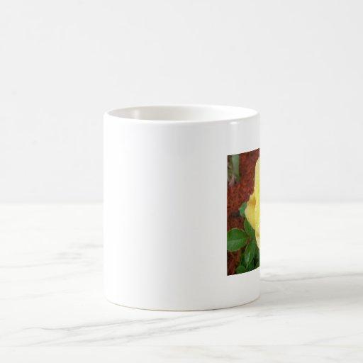 Raindrop Rose Mug