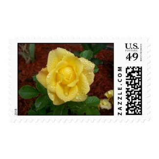 Raindrop Rose Postage
