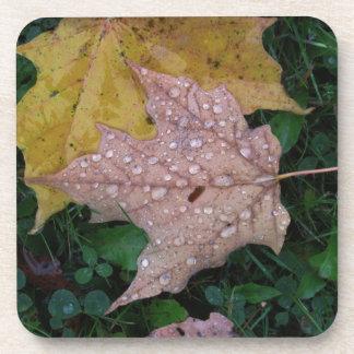 Raindrops In Fall Coasters