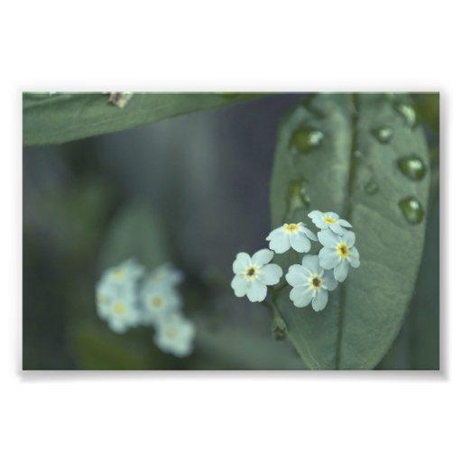 Raindrops Keep Falling Photo Print