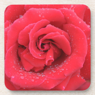 Raindrops on a Red Rose Drink Coaster