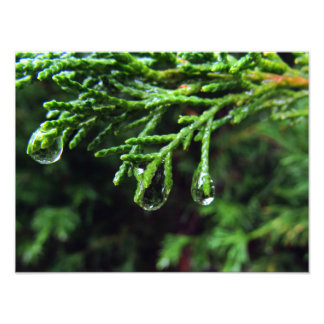 Raindrops on a tree branch (#2) photo print