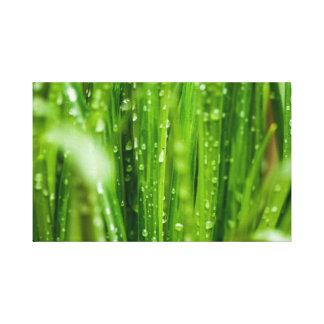 Raindrops on blades of grass canvas print