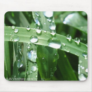 Raindrops on Blades of grass Mouse Pad