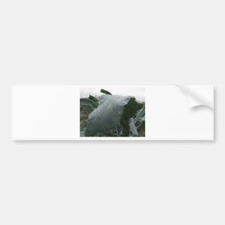 Raindrops on cauliflower leaves bumper sticker