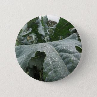 Raindrops on cauliflower leaves pinback button