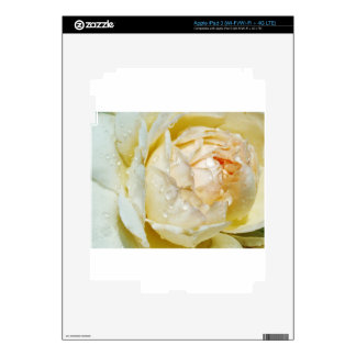 Raindrops on Champagne Blush  White Rose floral Decal For iPad 3