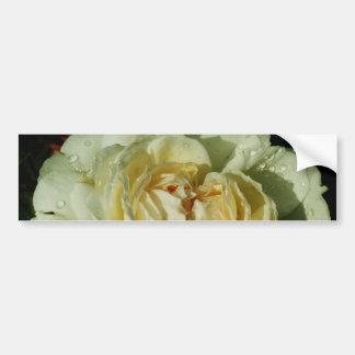 Raindrops on Champagne White Rose floral Bumper Sticker