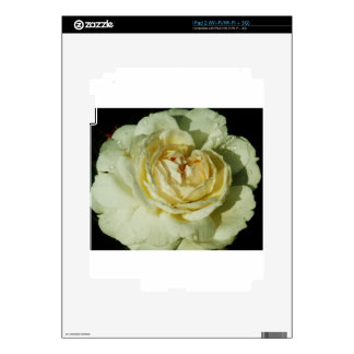 Raindrops on Champagne White Rose floral iPad 2 Skins