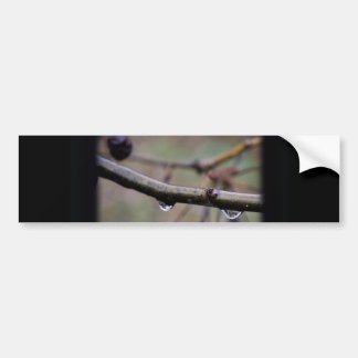Raindrops on Crepe Myrtle with Border Car Bumper Sticker