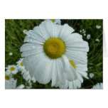 Raindrops on Daisy I Wildflower Nature Photography Card