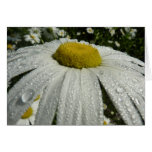 Raindrops on Daisy III Beautiful Nature Photograph Card