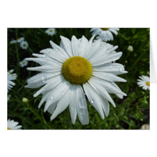 Raindrops on Daisy Note Card