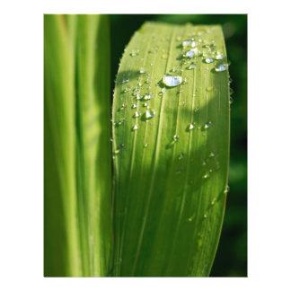 Raindrops on green leaf flyer