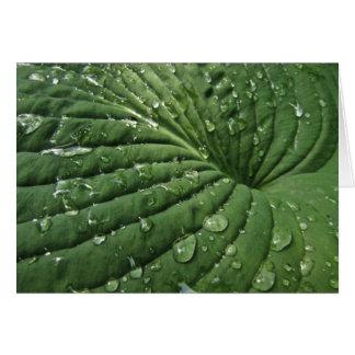 Raindrops on Hosta Leaf Blank Card
