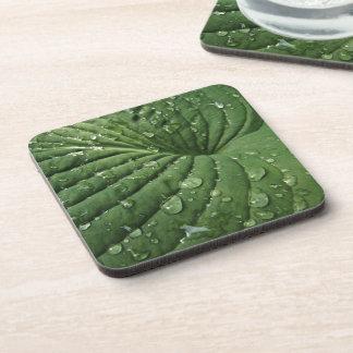Raindrops on Hosta Leaf Cork Coasters
