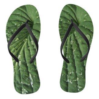 Raindrops on Hosta Leaf Flip Flops