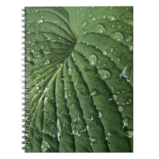 Raindrops on Hosta Leaf Notebook