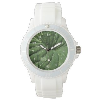 Raindrops on Hosta Leaf Watch