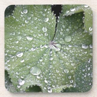 Raindrops on Leaf Beverage Coaster
