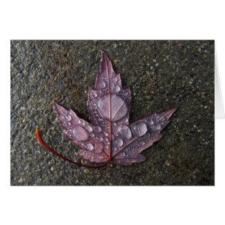 Raindrops on Leaf Cards