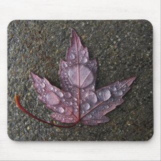 Raindrops on Leaf Mouse Pad