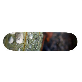 Raindrops on leaf skate decks