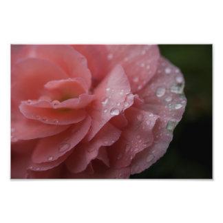 Raindrops on Petals Photo Print