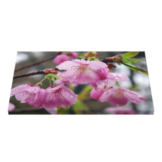 Raindrops on pink cherry blossoms canvas print