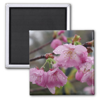 Raindrops on pink cherry blossoms magnet