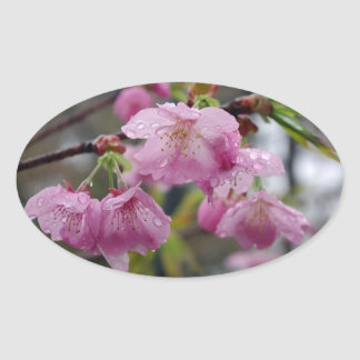 Raindrops on pink cherry blossoms oval sticker