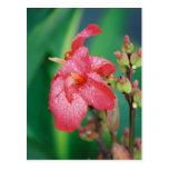 Raindrops On Pink Flower Postcard